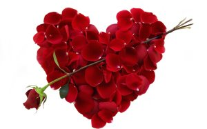 rose-valentine-s-day-cupid-images